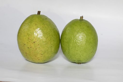 Two Guavas Fruits