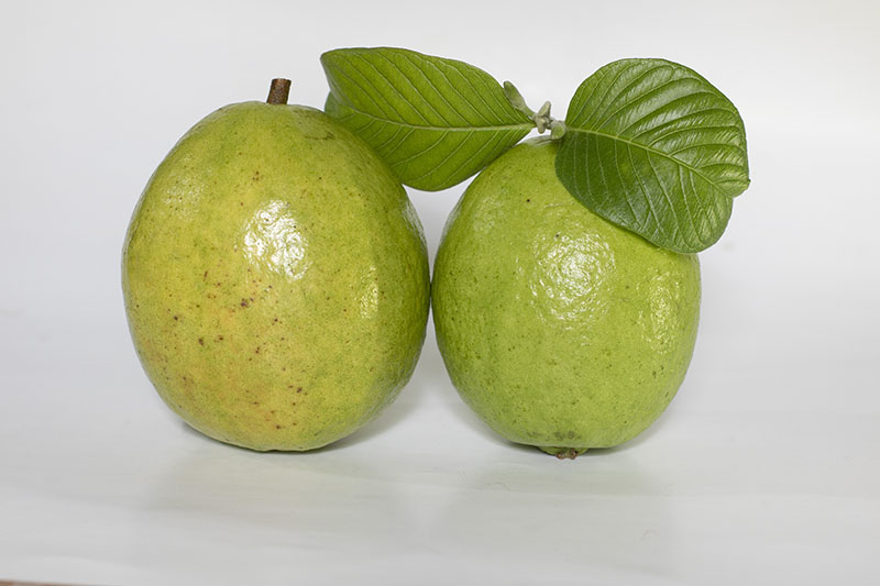 Two Guavas Fruit with Leaf