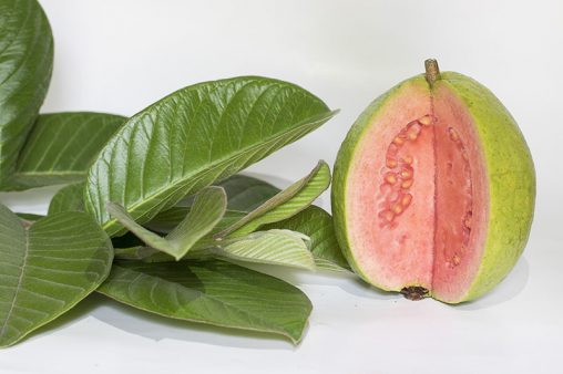 Guavas Tropical Fruits with Leaf