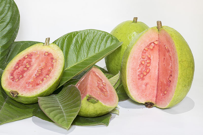 Guavas Tropical Fruits