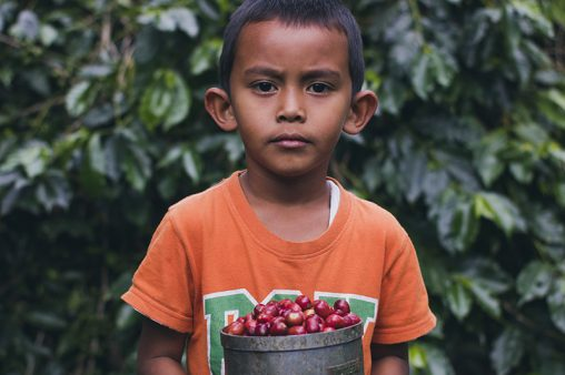 Kids shows proudly his harvested coffee