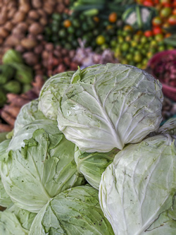 Fresh cabbage in the market
