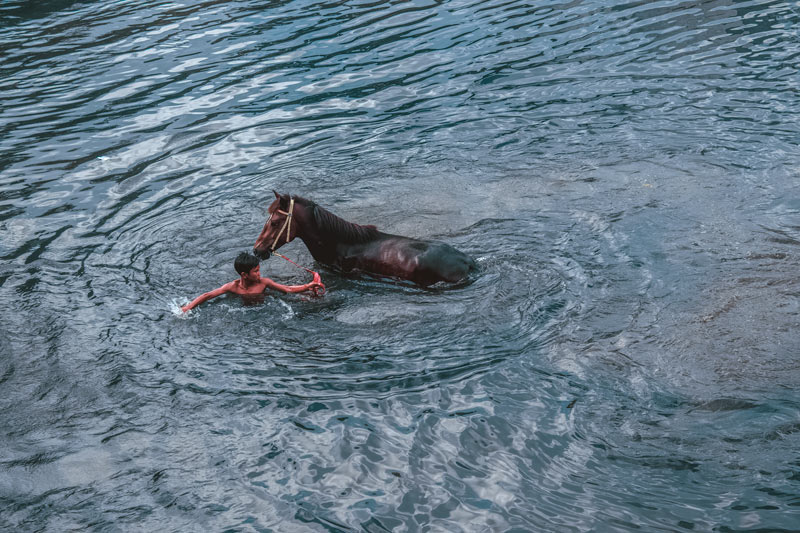 The boy bathes his horse